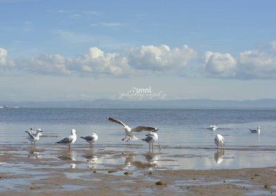 a-birds-life